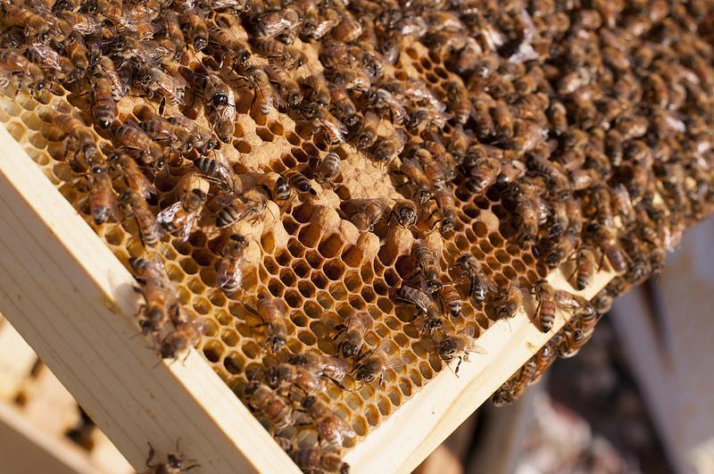 Kit pszczeli – co warto wiedzieć?